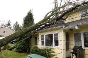 A residential home takes damage from a falling tree during Hurricane Sandy