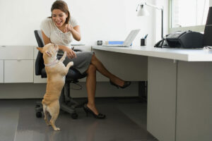 Is taking your dog to work a top employee perk or just a workplace distraction?
